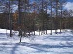 071122_snow2.jpg
