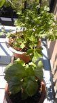 100425_herbs.jpg