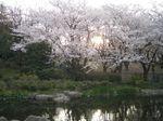 080403_sunset.jpg